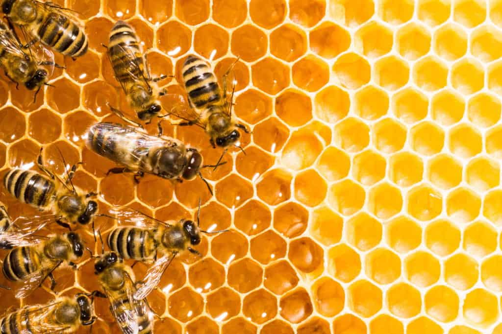 Bees-working-on-honey-cells