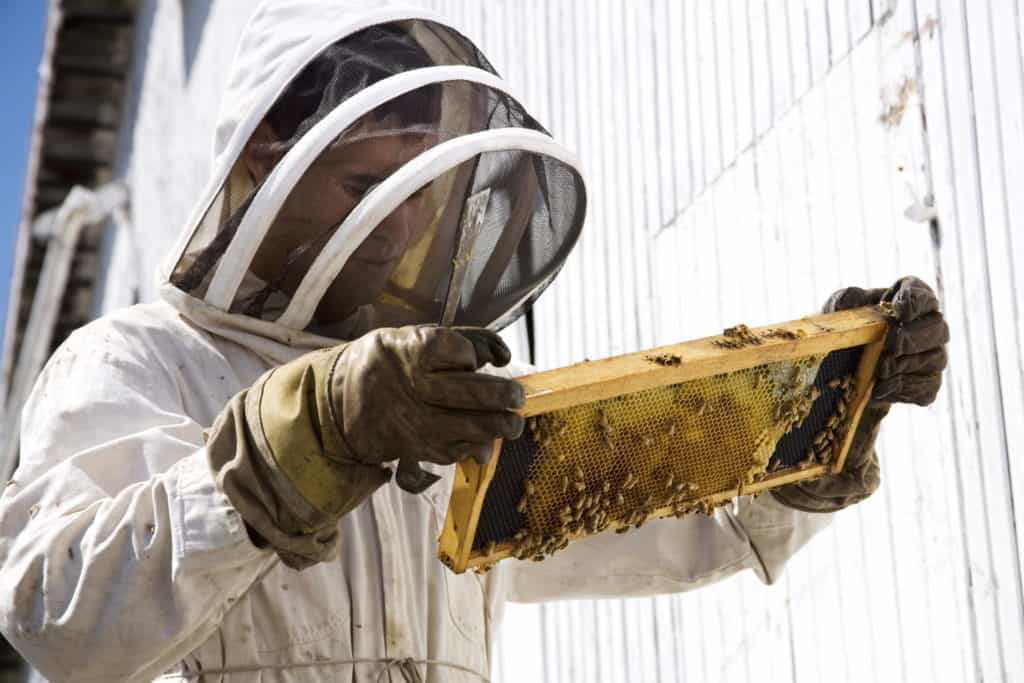Full-Bee-Suit-Inspection