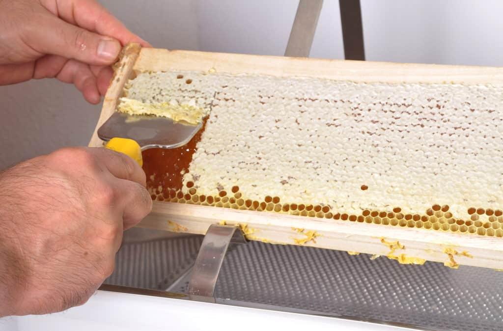 Uncapping-Honey-Comb