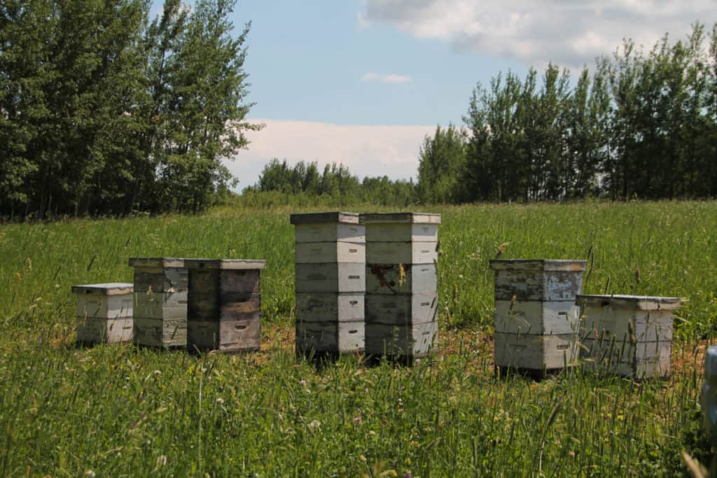beehives-in-a-field