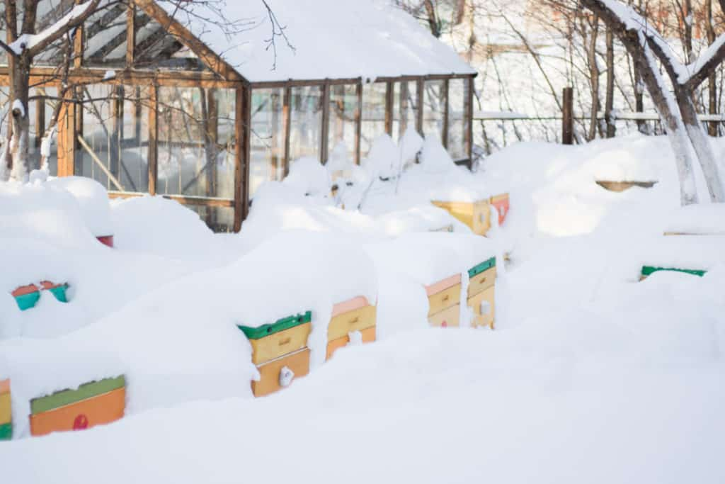 beehives-winter-snow-covered