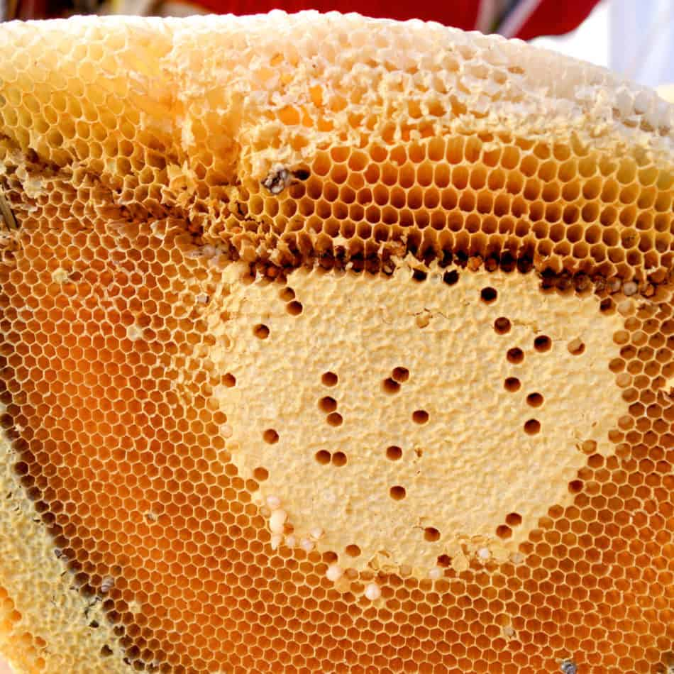 bees-filling-comb-with-honey